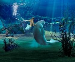 シドニー 水族館